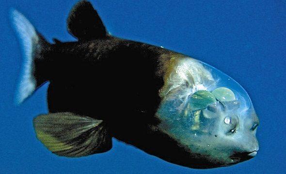 ない デメニギス 釣れ 【あつまれどうぶつの森攻略】デメニギス釣れる場所教えて